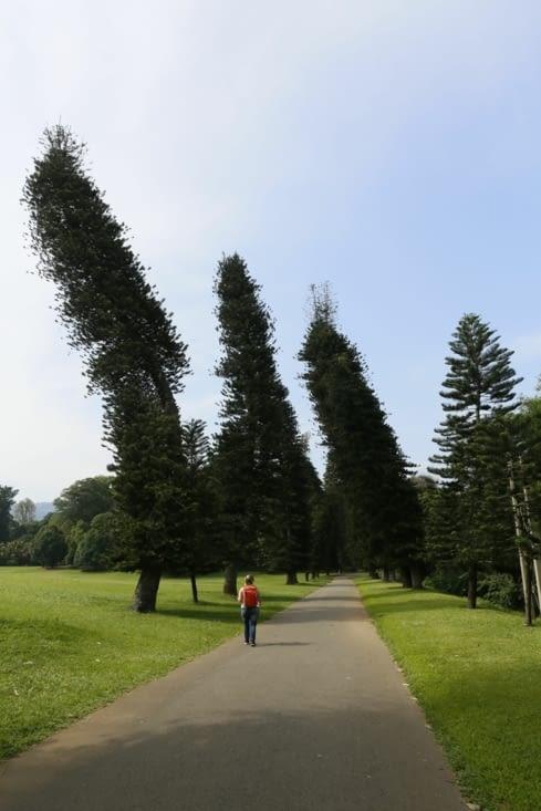 law trees ( arbres de la loi !)