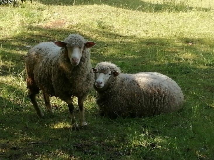 Ensuite, en arrivant dans la vallée, j'ai vu des moutons