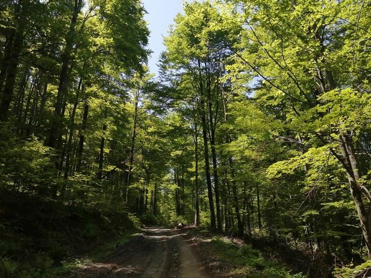 Les forêts de feuillus