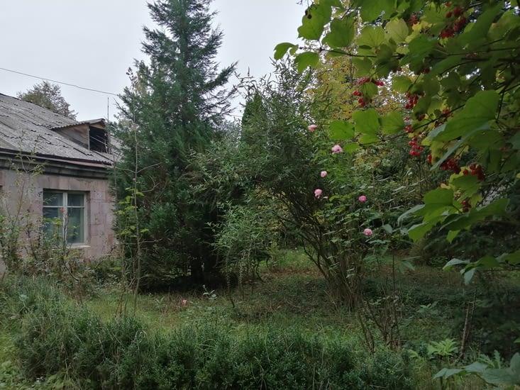 Quelques roses d'automne