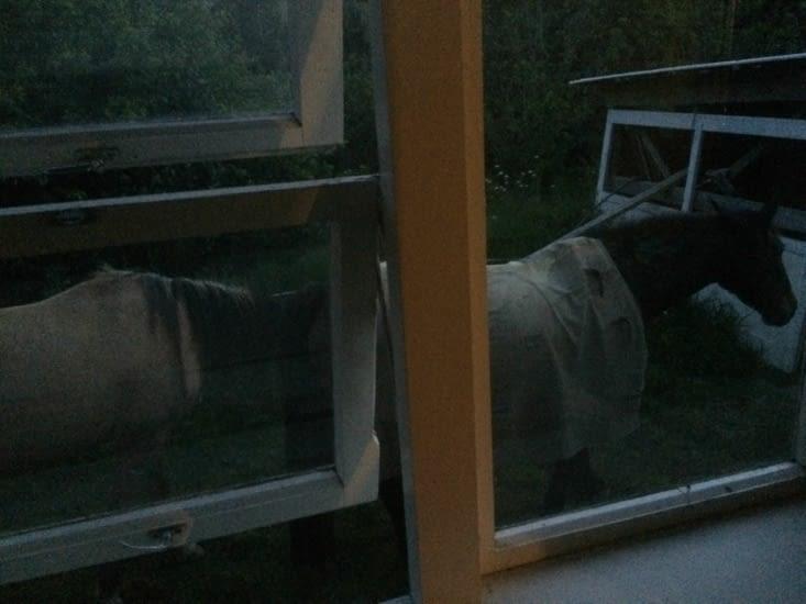 Des chevaux devant ma chambre. Le bruit de leur galop m'a réveillée cette nuit!!