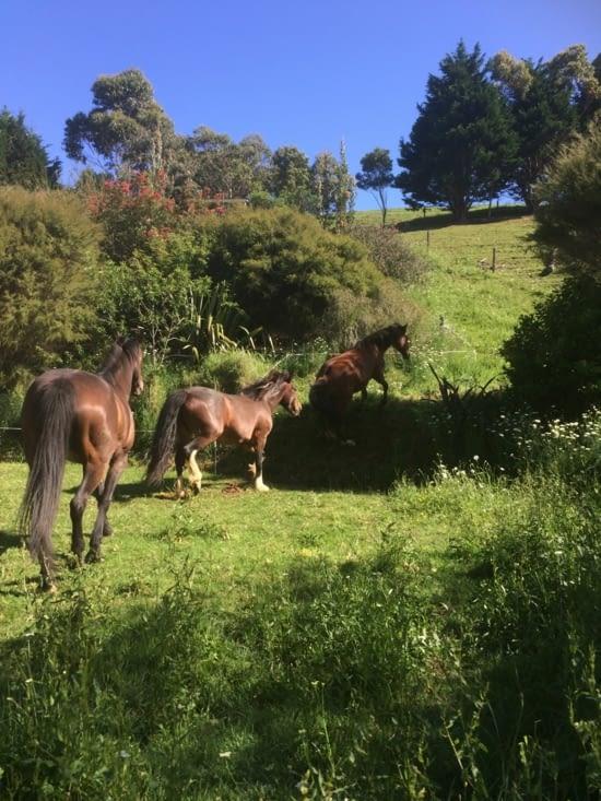 Les chevaux dans un de leur pré