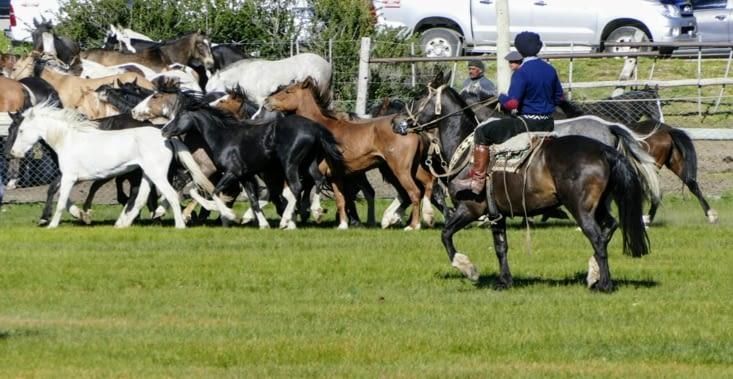 Rodeo gaucho
