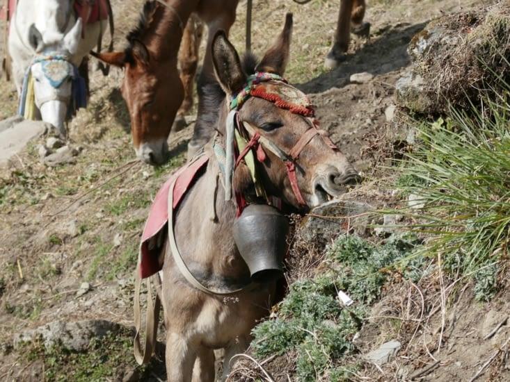 Je peux pas, j'ai poney!