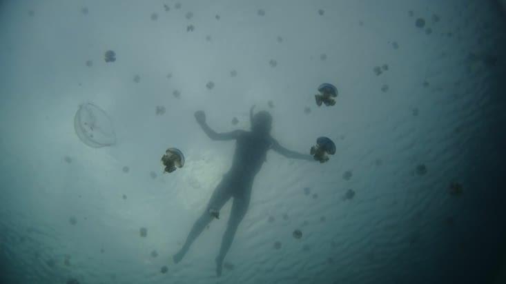 Cap ou pas cap de nager avec les meduses?