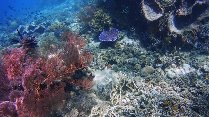 Les coraux de Tumbak