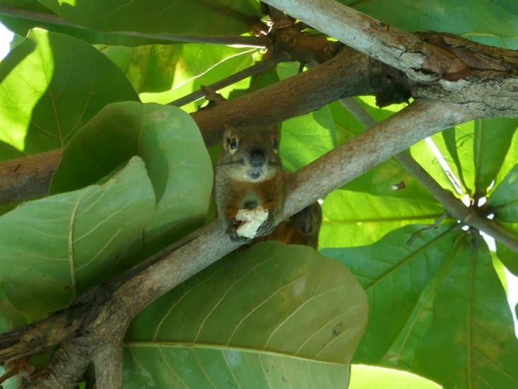 Les écureuils de l'hotel