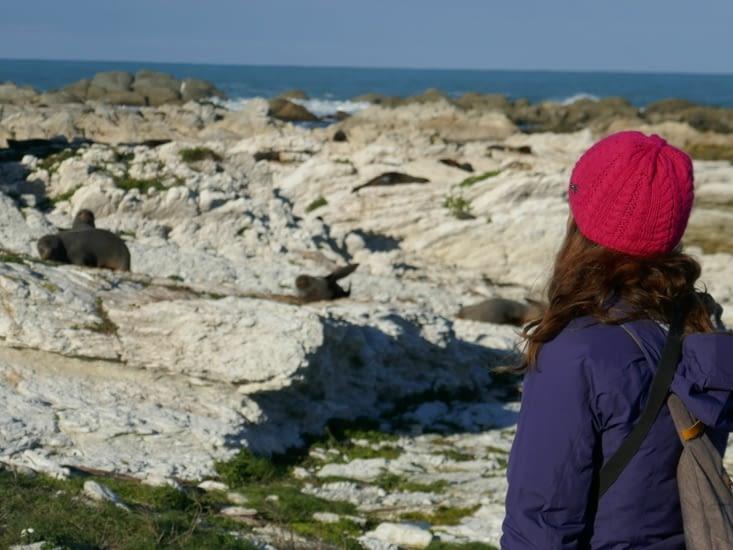 Observation des Otaries