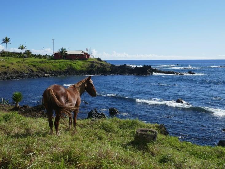 Une île avec beaucoup de chevaux