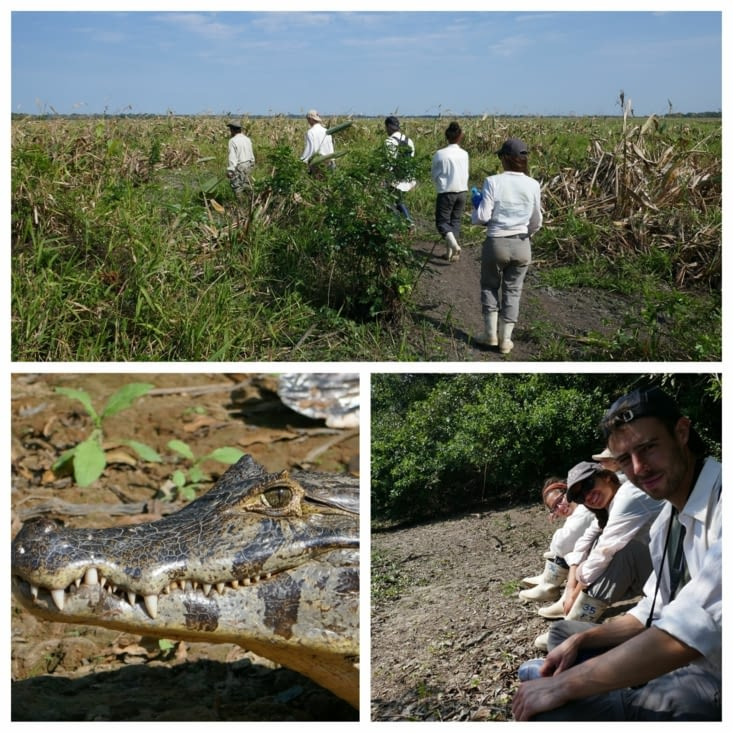 A la chasse à l'anaconda