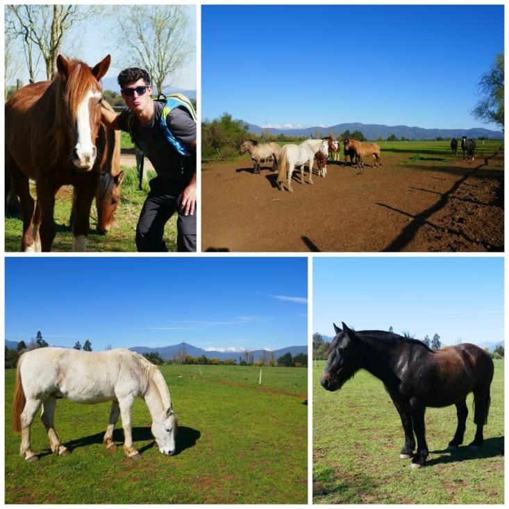 Présentation de nos chevaux