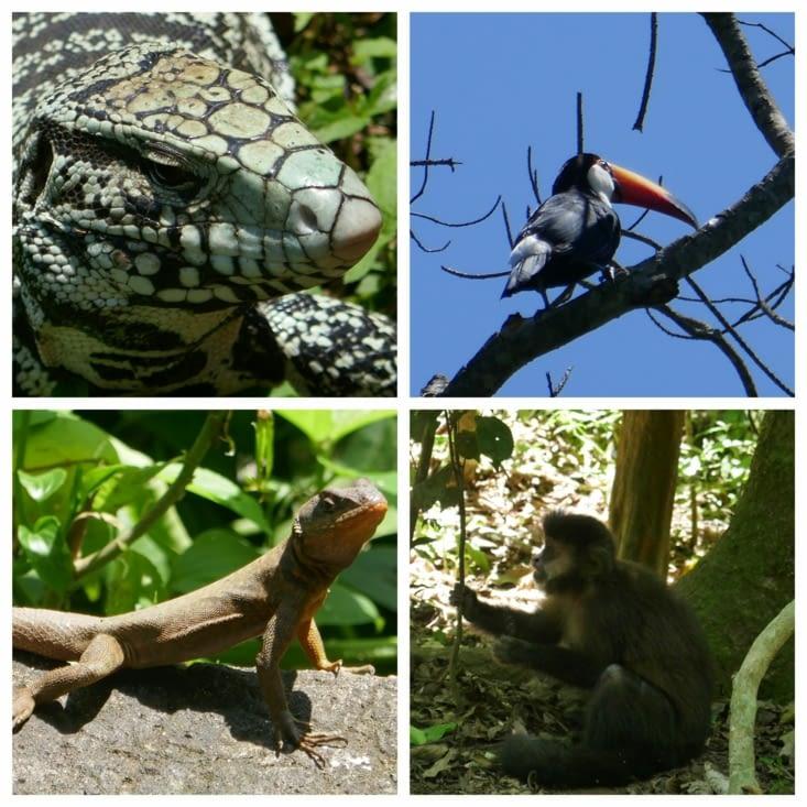 Les chutes Iguazu et ses animaux