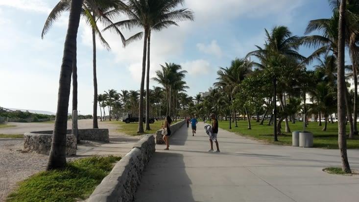 Balade, à l'ombre des cocotiers. ATTENTION AUX CHUTES DE NOIX DE COCOS
