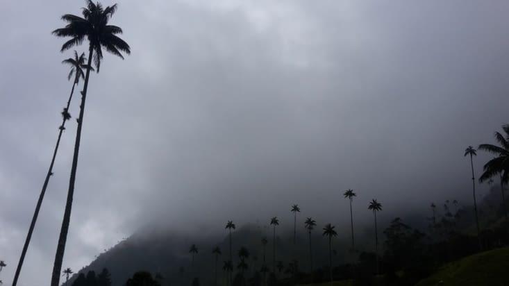 Les palmiers dans les nuages