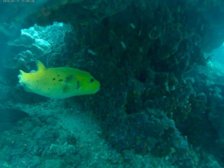 Le poisson jaune