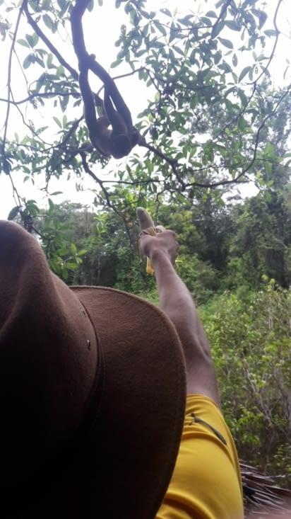 Les singes en liberté s'approchant pour manger dans les mains