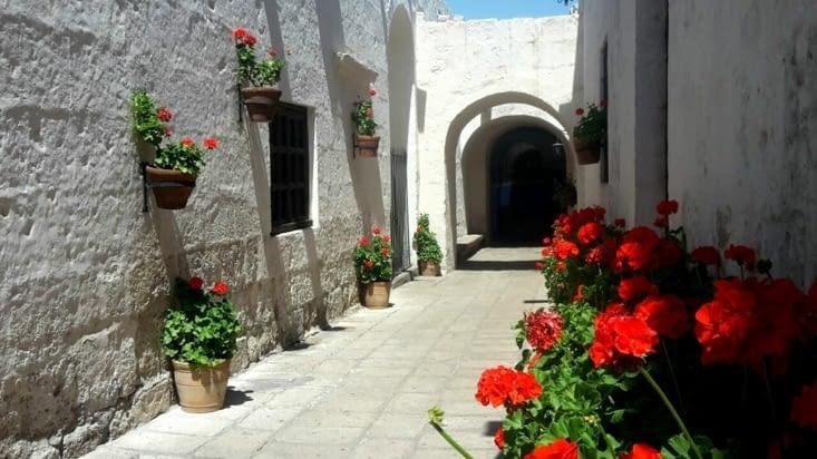 Les fleurs et les murs