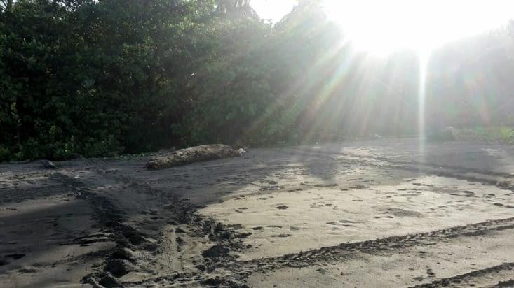 Les traces des tortues géantes sur le sable