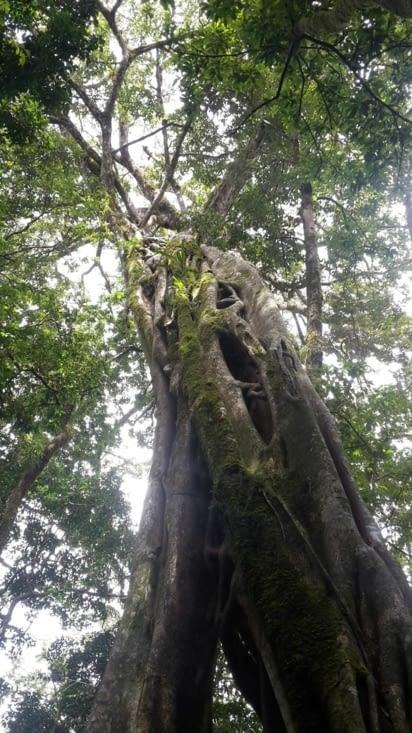 L'arbre creux à escalader jusqu'en haut !
