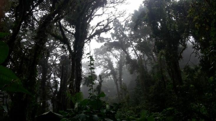 Le bosquet nuageux