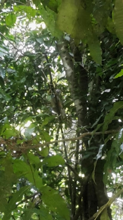 Manuel Antonio : Le singe écureuil