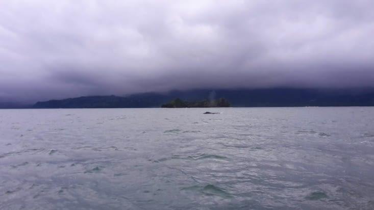 La baleine et son jet vaporeux