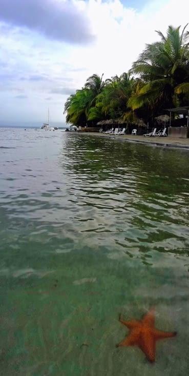 La plage des étoiles de mer (Panama)