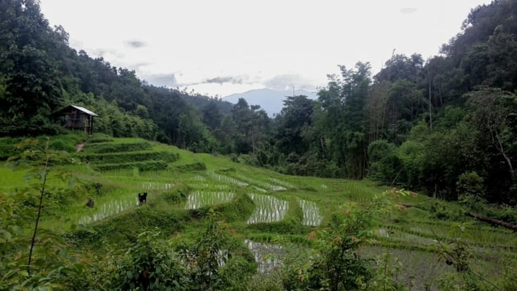 Quelques rizières d'un village Karen (Thaïlande)