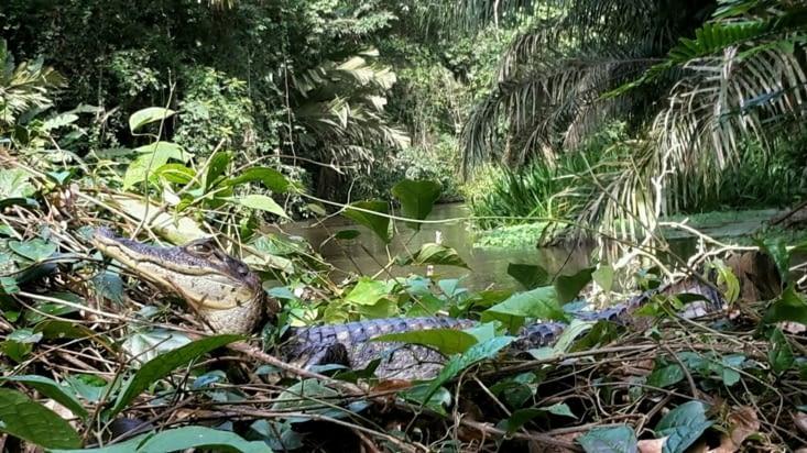Un nouveau compagnon (Costa Rica)