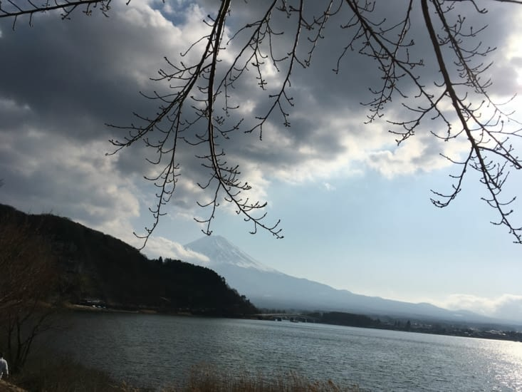 Magnifique photo du mont Fuji avec les cerisiers en fleur (avec de l'imagination)