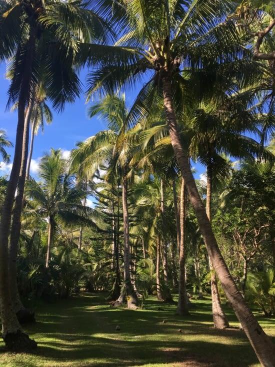 Camping de la baie des rouleaux : un petit coin de paradis