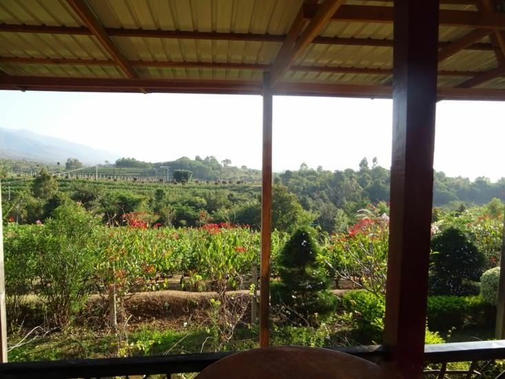 Fin d'après-midi dans un vignoble birman