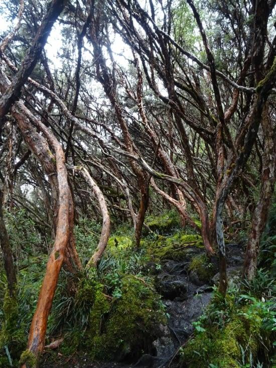 Forêt très particulière... Et surtout très sympa !