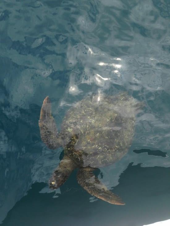Y a le papa tortue, et la maman tortue, et les enfants tortues ...