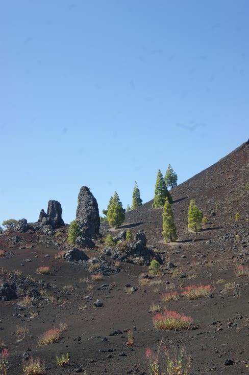 arbres de vert et de pierre
