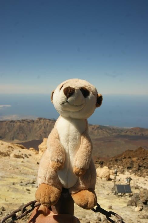 Baadaye en haut du Teide