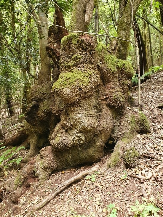 des arbres étranges