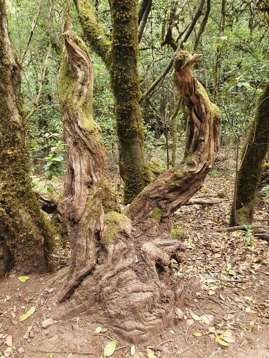 encore un arbre étrange