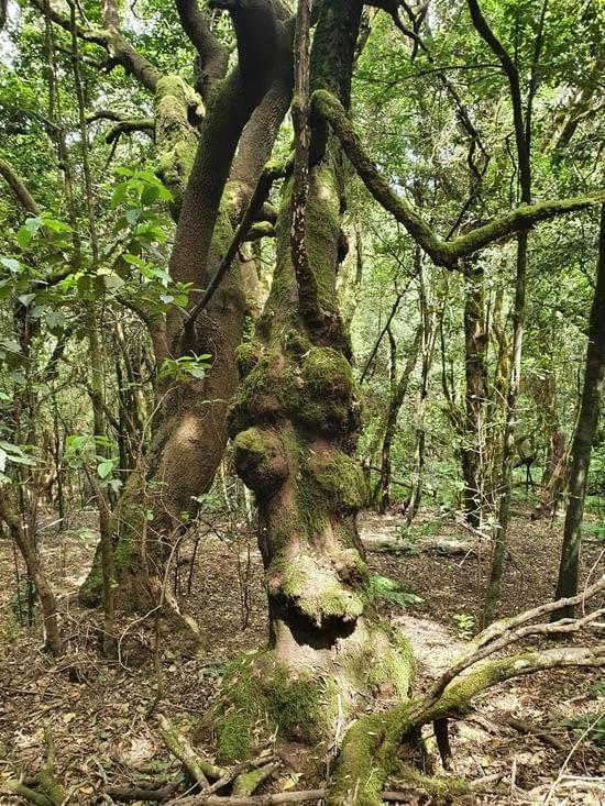 quand je vous dis que c'est une forêt magique