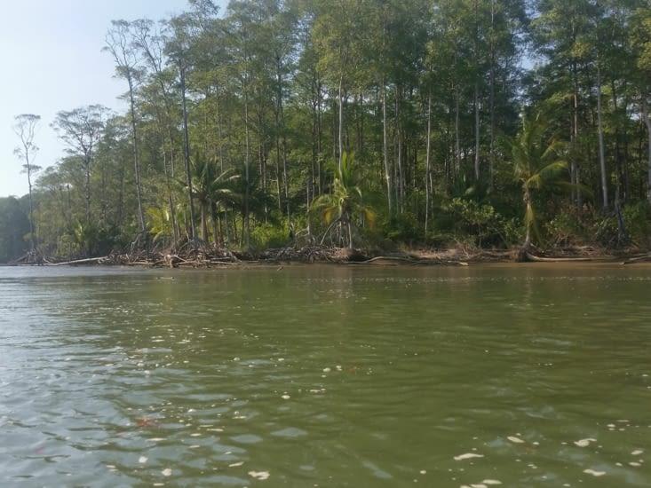 Mangrove toujours
