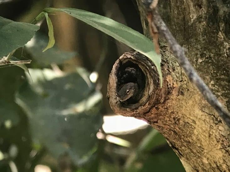Grenouille cachée dans un arbre