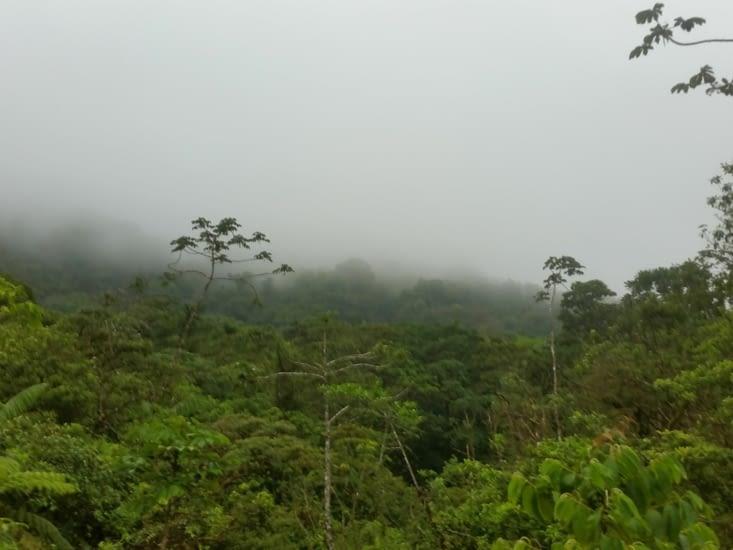 Bosque Nubioso