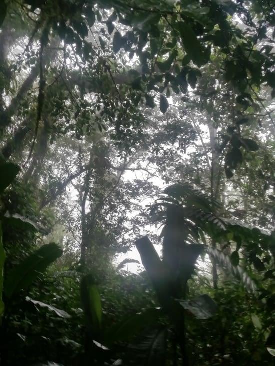 Arrivée dans la jungle