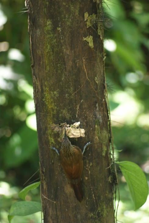 Oiseau transportant de quoi faire son nid