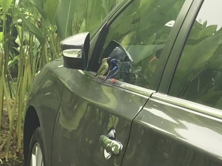 Les voleurs de voiture