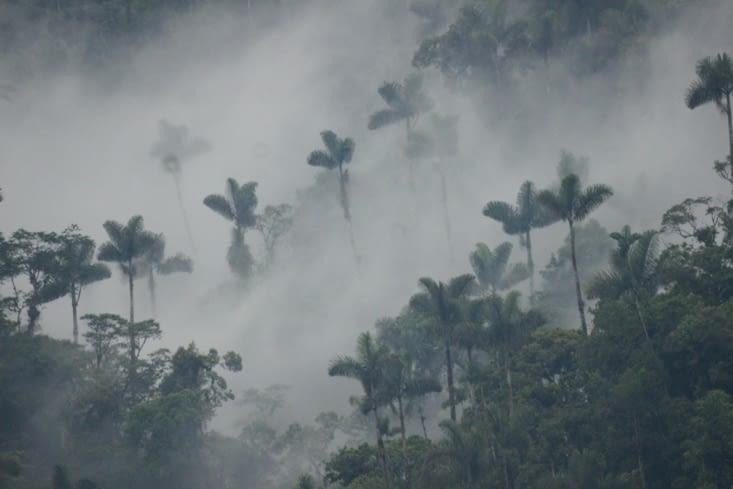Bosque de nubes encore