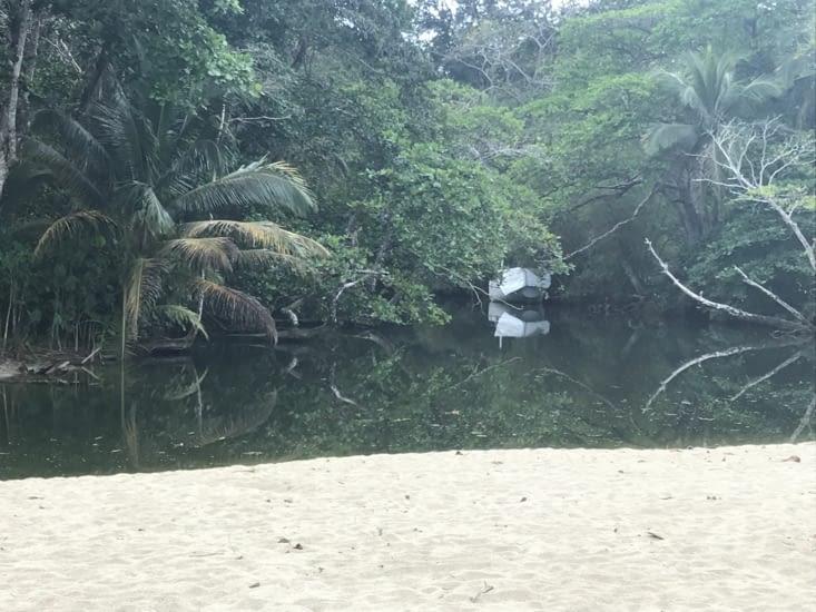 La mangrove jusqu'a la plage