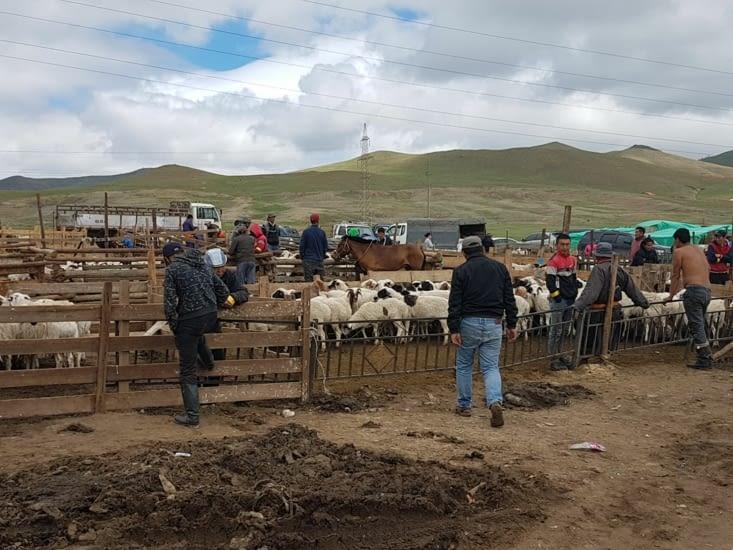 Toujours le marché  à bestiaux
