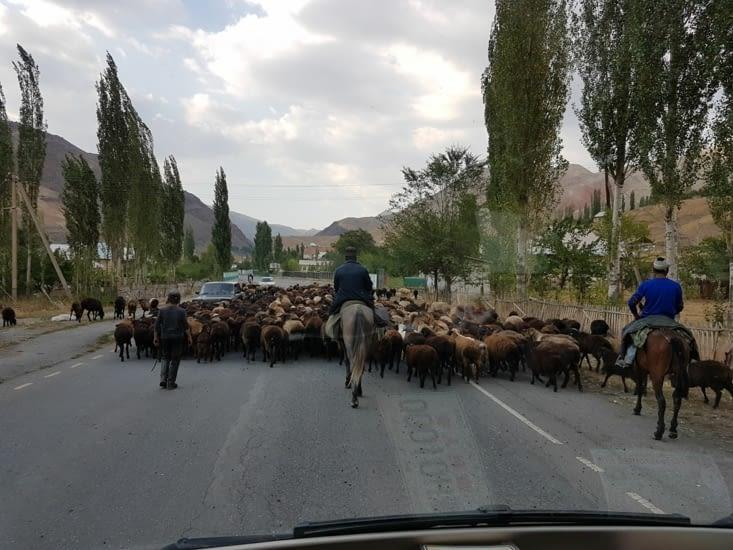 Àpres les chevaux, les moutons!