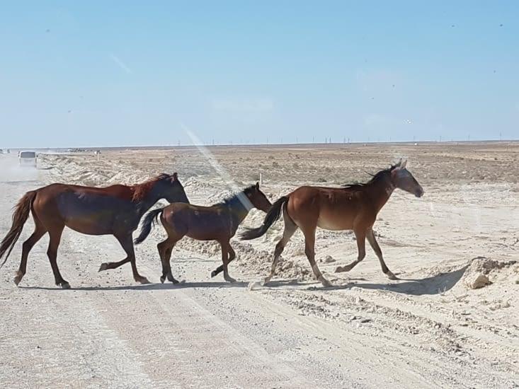 On s'arrête pour laisser passer des chevaux. ...